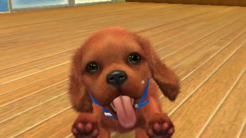 Parents Guide Nintendogs  Cats Golden Retriever  New Friends Age rating mature content and difficulty