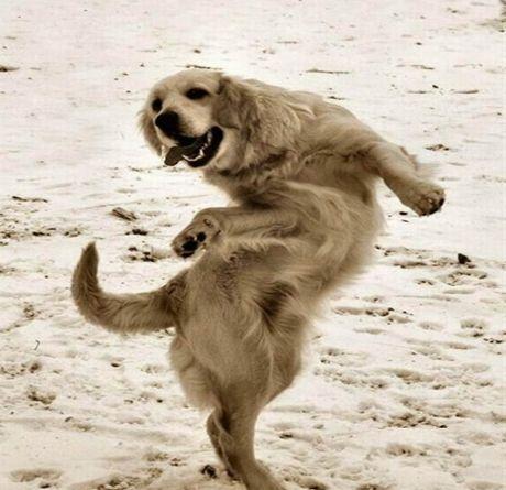 A Dancing Dog